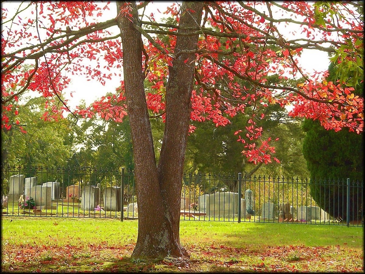 The Old North Church Cemetery in Historic Nacogdoches, Texas