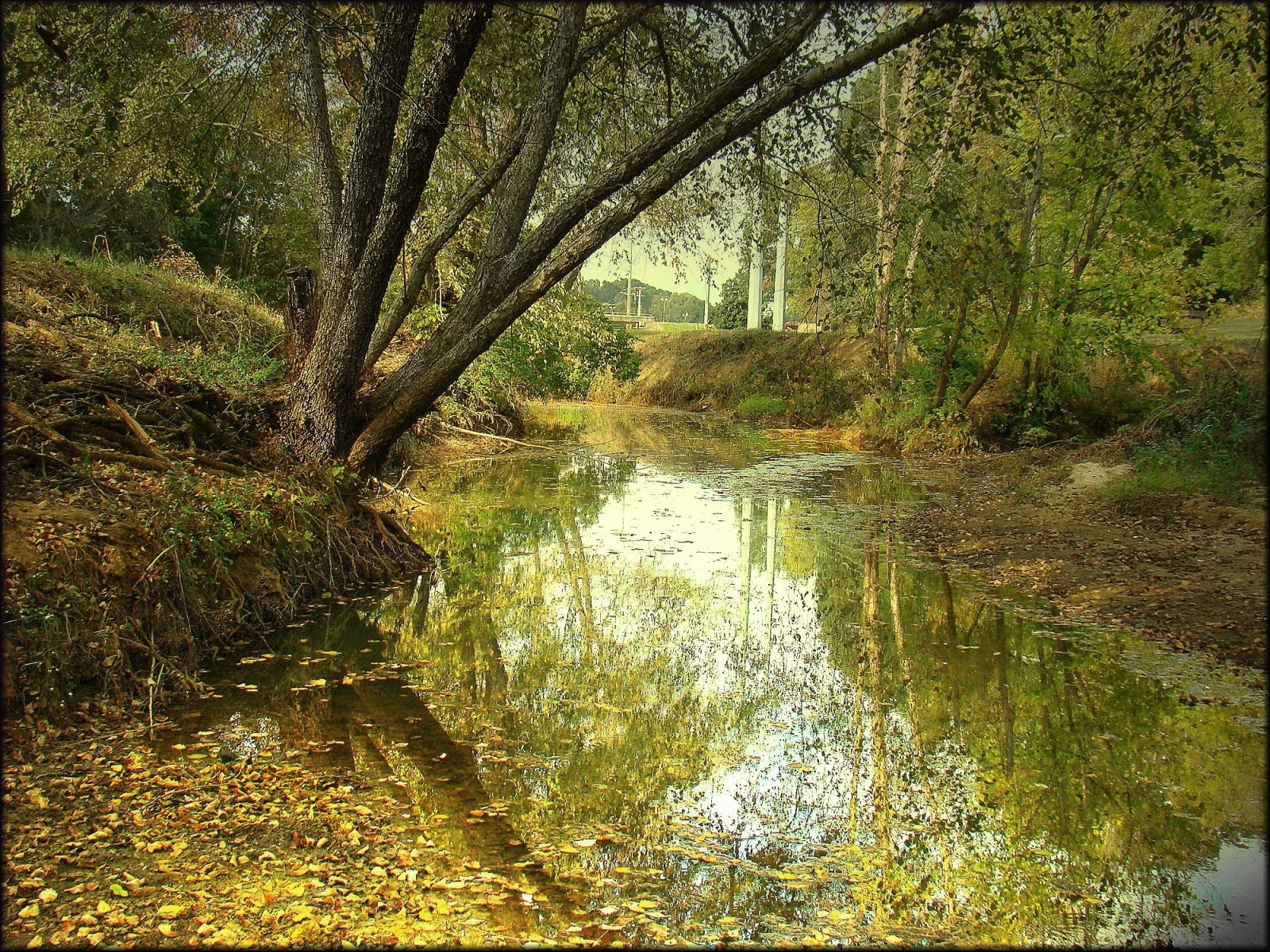 A View of Lanana Creek at the SFA University Arboretum