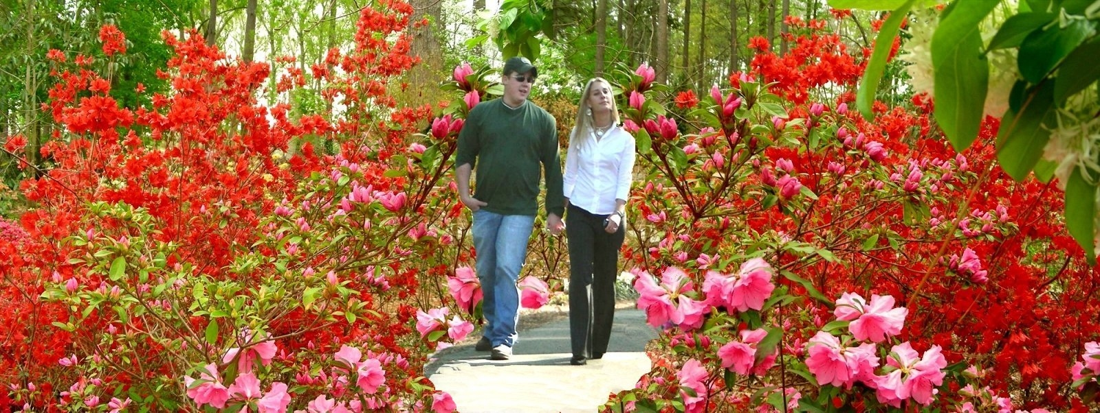 The Red and Pink Azaleas of Mize Azalea Garden in Historic Nacogdoches