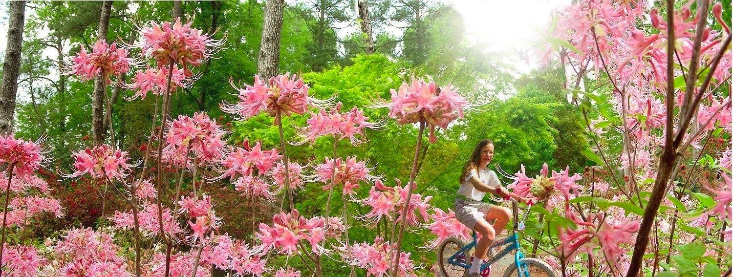 The Cherub's Blush Azalea at Mize Azalea Garden