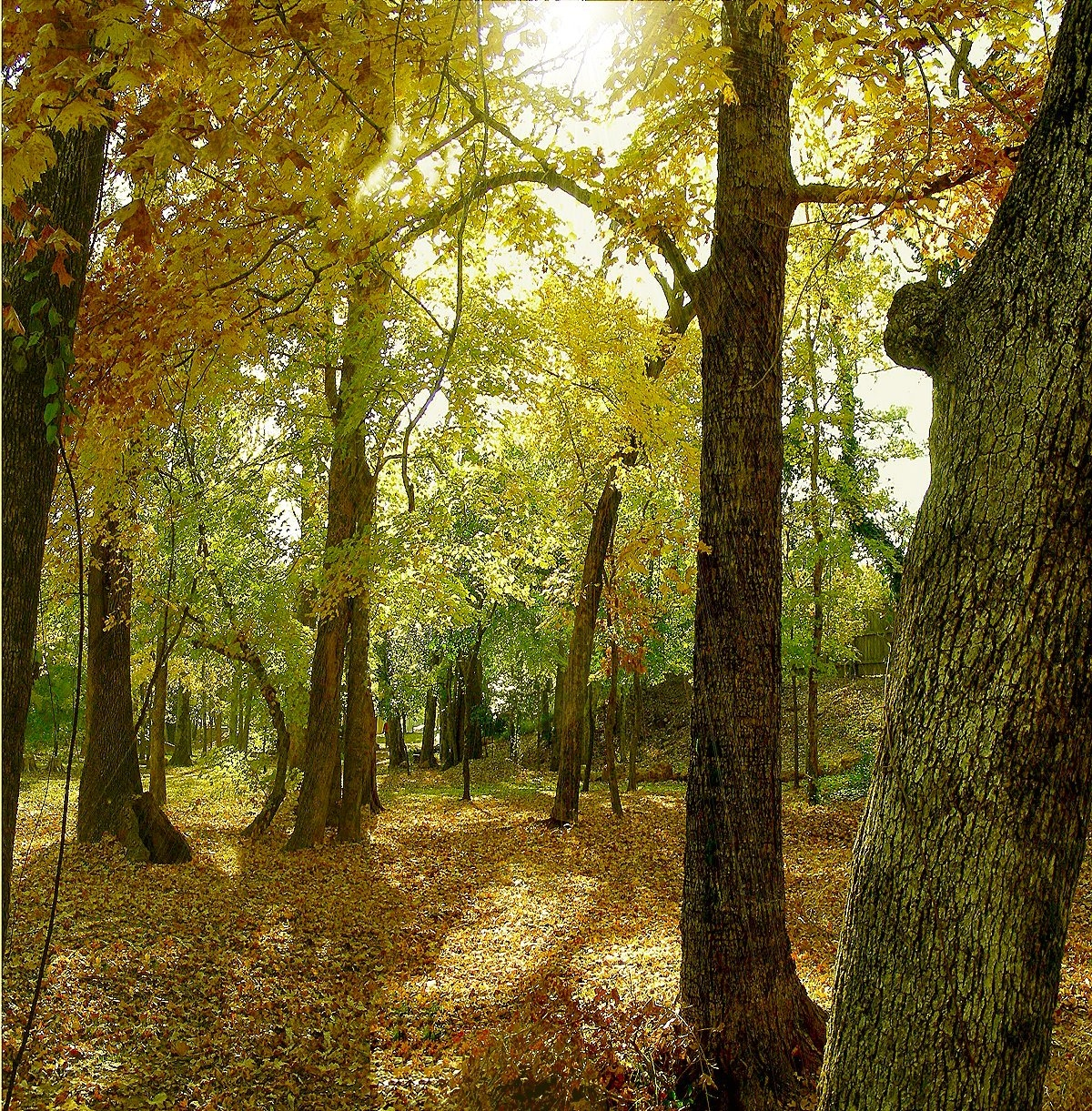 Autumn Woodland in Margil Park on La Nana Creek Trail