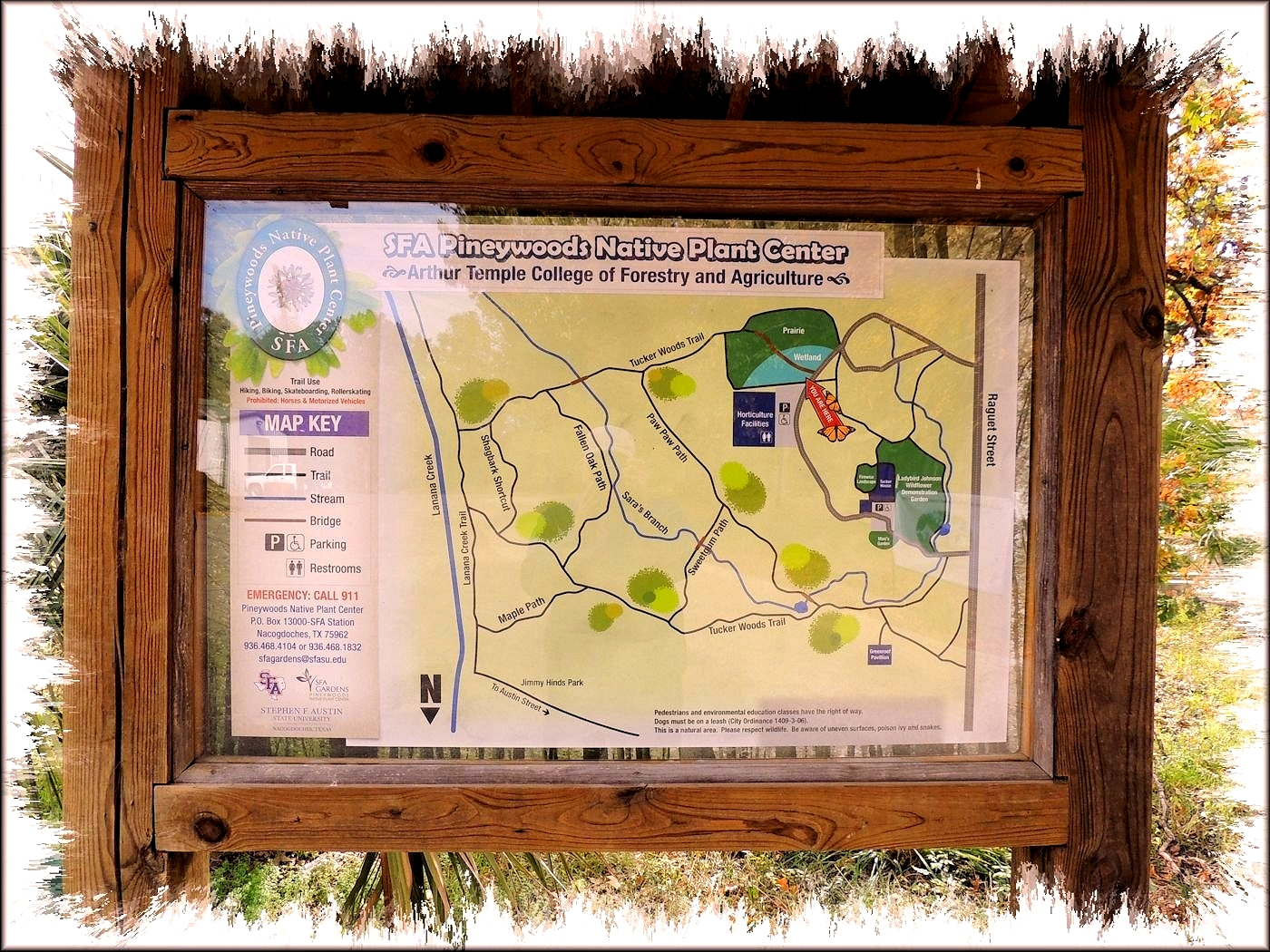 A Map of the Trails at the SFA Pineywoods Native Plant Center