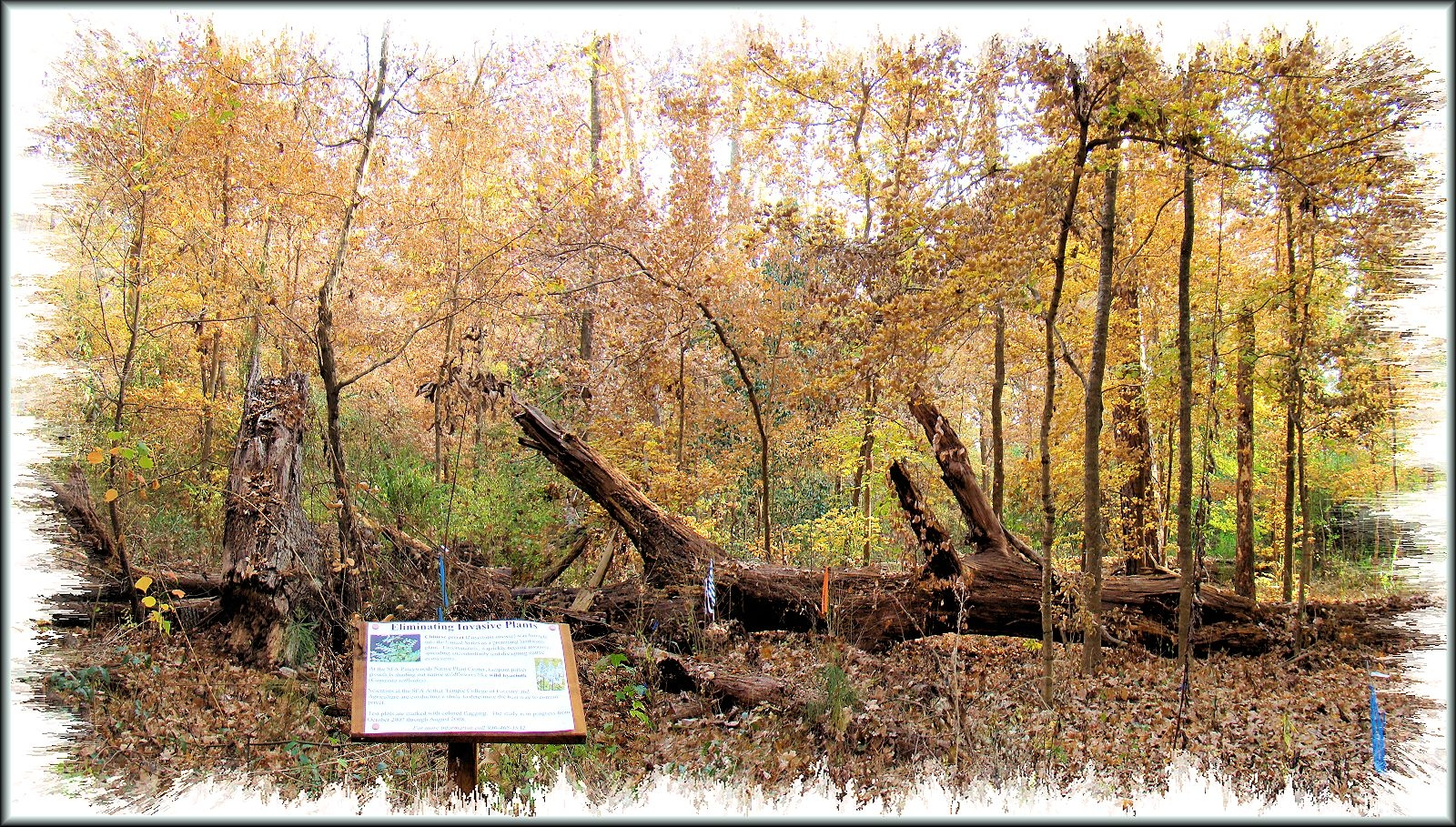 The Fallen Tree at the Pineywoods Native Plant Center