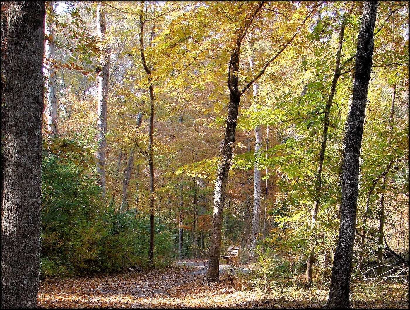 North Tucker Woods Trail in Historic Nacogdoches