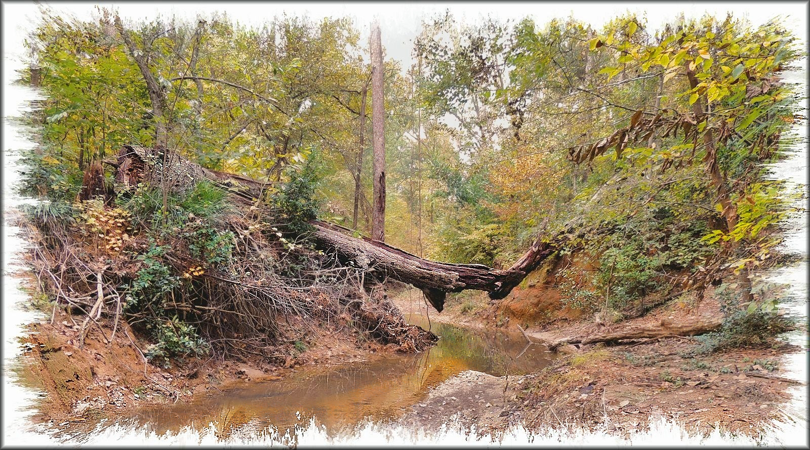 Broken Tree over Burrows Creek at the SFA Recreational Trails in Historic Nacogdoches