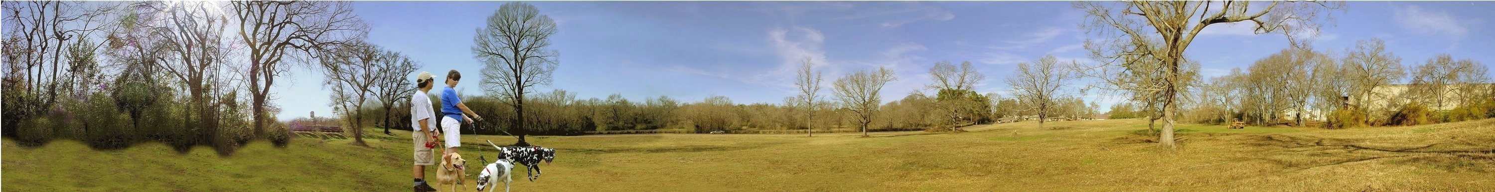 Picture of Winter Landscape in Historic Nacogdoches