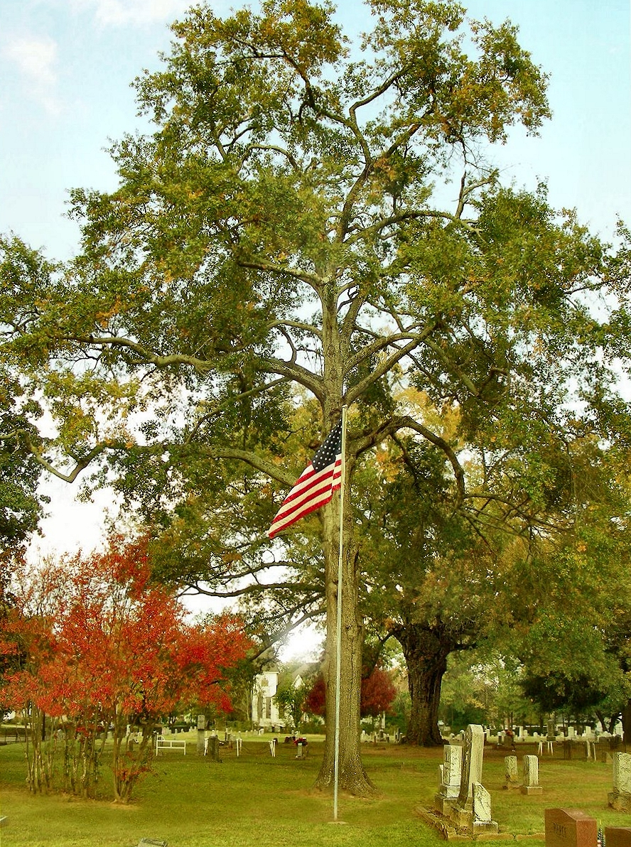 World War I Veterans Section  at Oak Grove Cemetery in Historic Nacogdoches
