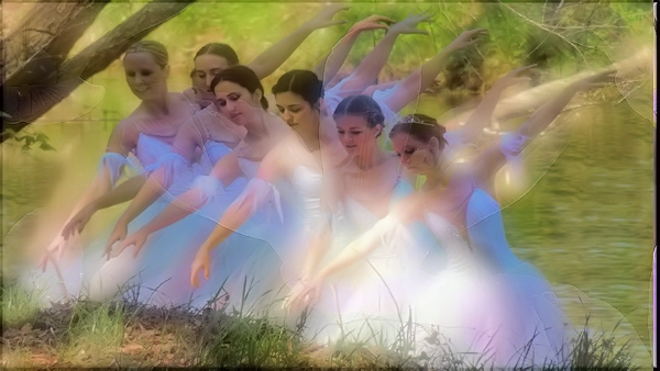 Ballerinas by Lanana Creek in the Shade Garden