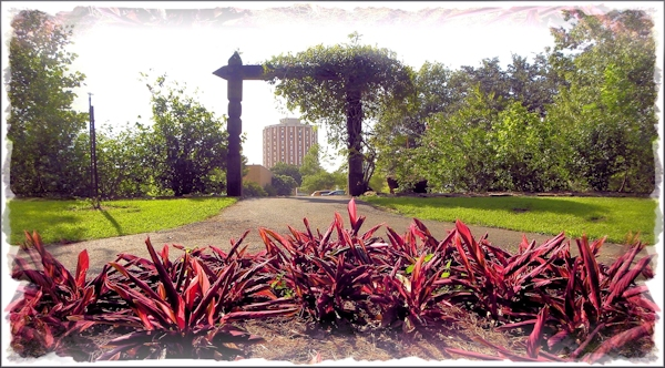 A View of the Campus from the Shade Garden