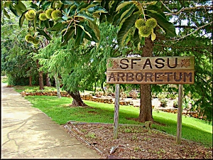 An Entrance to the SFA University Arboretum