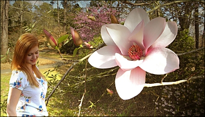 The Serene Magnolia at the SFA University Shade Garden