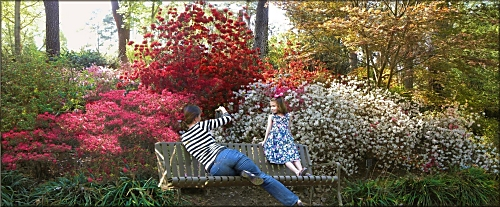 Pictures at Mize Azalea Garden