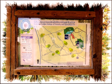 Map of the Trails at the SFA Pineywoods Native Plant Center
