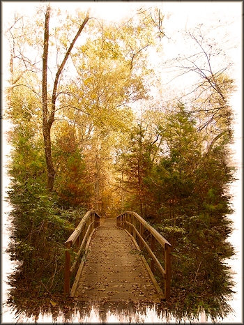 Autumn Across the Bridge at the Pineywoods Native Plant Center