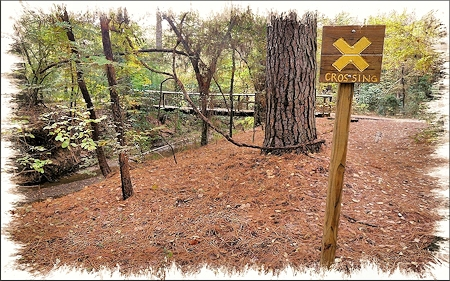 A Trail Crossing at the SFA Recreational Trails