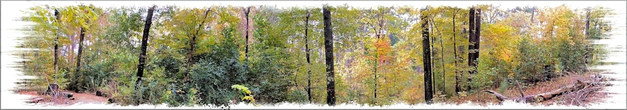 A View of the Woods at the SFA Recreational Trails