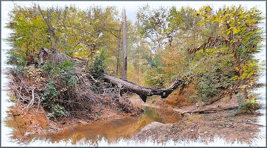 Broken Tree over Burrows Creek at the SFA Recreational Trails