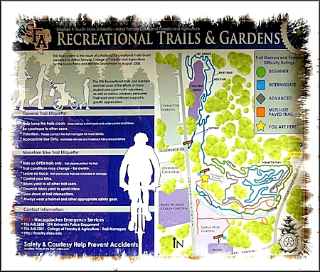 A Map of the Trails at the SFA Recreational Trails
